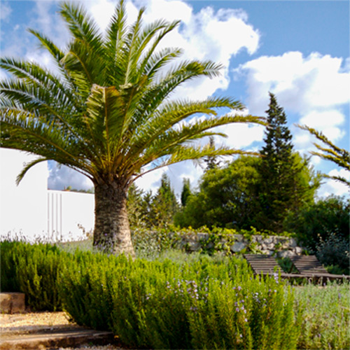Landscaping of gradens Ibiza